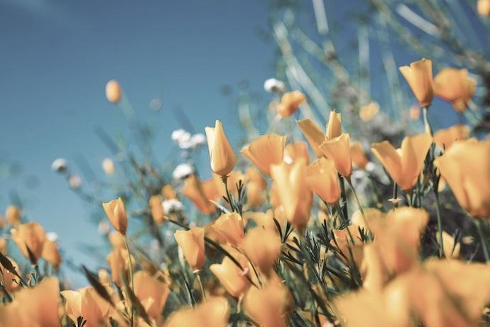 690flower